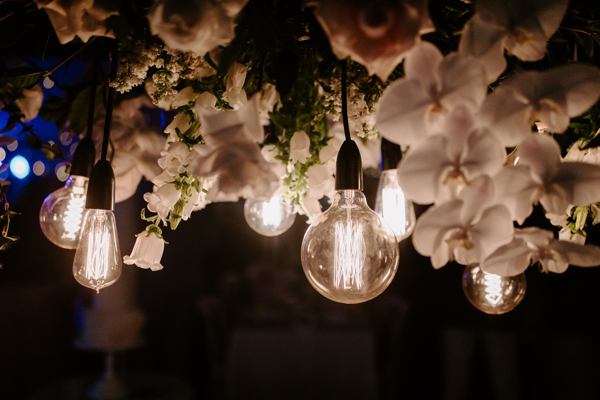 Hanging installation featuring orchids